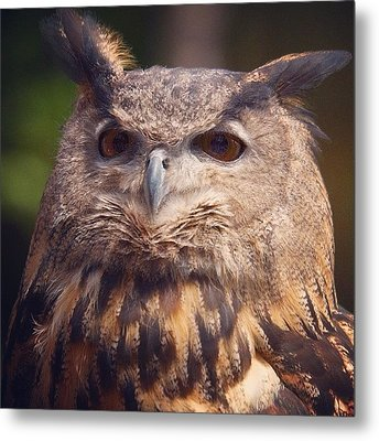 Dare I Say Owls Are A Hoot? Metal Print by Heidi Hermes