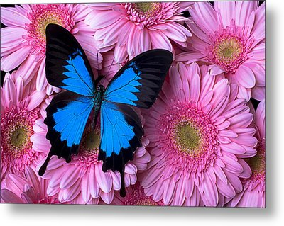 Dark Blue Butterfly Metal Print by Garry Gay