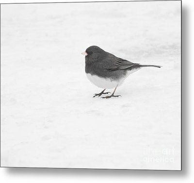 Metal Print featuring the photograph Dark-eyed Junco In Winter by Anita Oakley