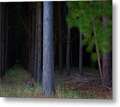 Dark Forest Metal Print by Tim Nichols