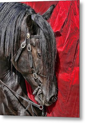 Dark Horse Against Red Dress Metal Print by Jennie Marie Schell