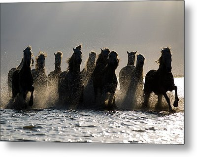 Dark Horses Metal Print by Carol Walker