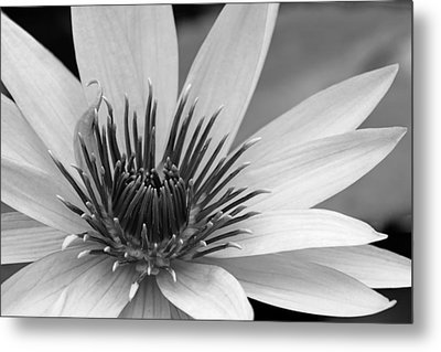 Metal Print featuring the photograph Dark Throated Beauty I by Dawn Currie