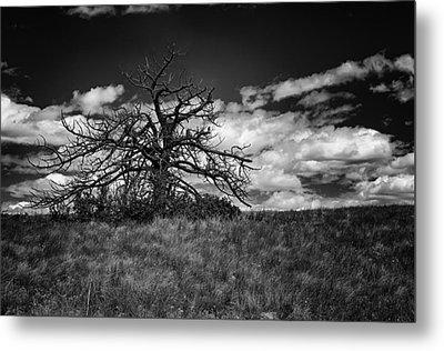 Dark Tree Metal Print by Tony Boyajian