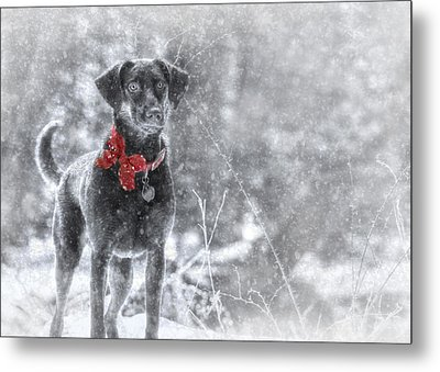 Dashing Through The Snow Metal Print by Lori Deiter