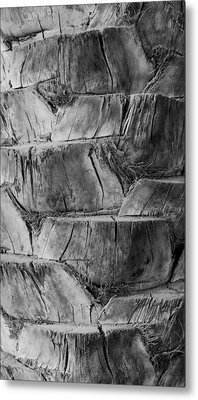 Date Palm Bark Metal Print