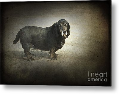 Dawg Metal Print by The Stone Age