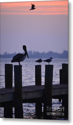 Dawn Brings Hungry Birds Metal Print