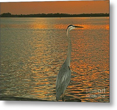 Metal Print featuring the photograph Dawn Greets A Blue Heron by Joan McArthur
