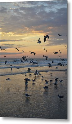 Dawn Gulls Metal Print