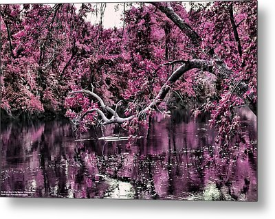 Day Dreaming Metal Print by Michelle and John Ressler