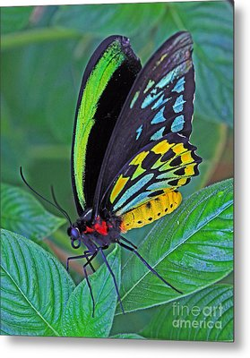 Day-glo Butterfly Metal Print by Larry Nieland