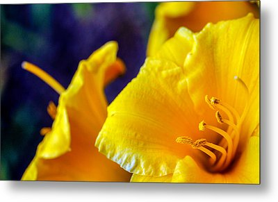 Metal Print featuring the photograph Day Lilies by Cathy Donohoue