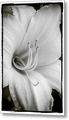 Metal Print featuring the photograph Day Lily  by Craig Perry-Ollila
