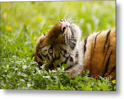 Daydreamer Metal Print by Ashley Vincent