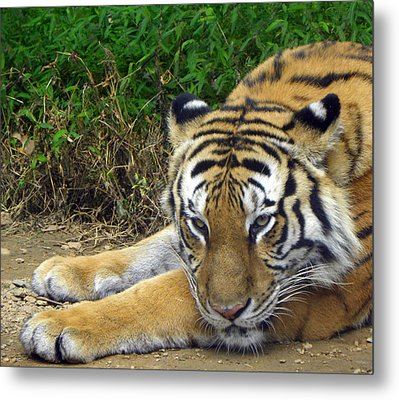Daydreaming Metal Print by Sandi OReilly