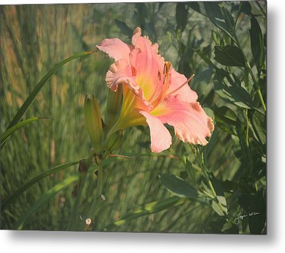 Metal Print featuring the photograph Daylily In The Sun by Jayne Wilson