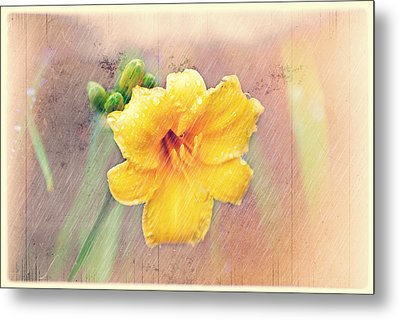 Daylily  Showers Metal Print by Mary Timman