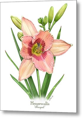 Daylily Svengali  Metal Print by Artellus Artworks