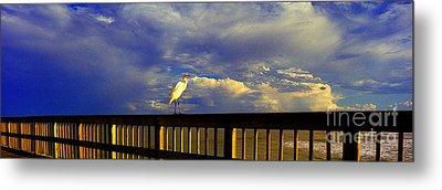 Daytona Beach Fl Bird Sun Glow Pier  Metal Print