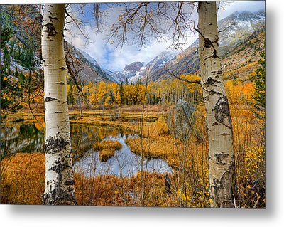 Dazzling Fall Foliage Metal Print by Mark Whitt