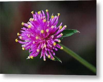 Metal Print featuring the photograph Dbg 050812-1779 by Tam Ryan