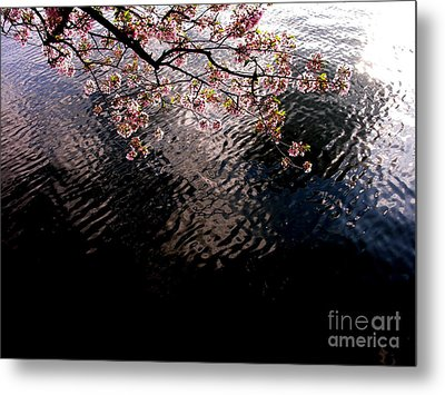 Metal Print featuring the photograph Dc Cherry And Black by Jacqueline M Lewis