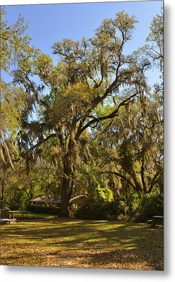 De Leon Springs - Classic Old Florida Metal Print