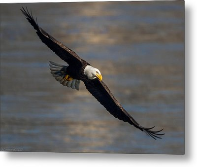 Dead Eye Metal Print by Glenn Lawrence
