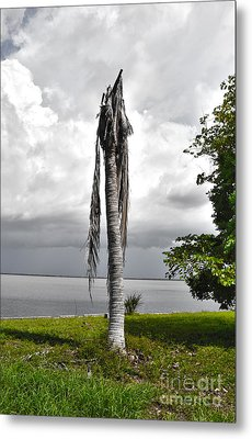 Metal Print featuring the photograph Dead Palm by Timothy Lowry