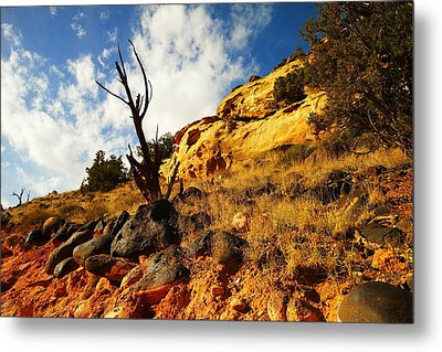 Dead Tree Against The Blue Sky Metal Print by Jeff Swan