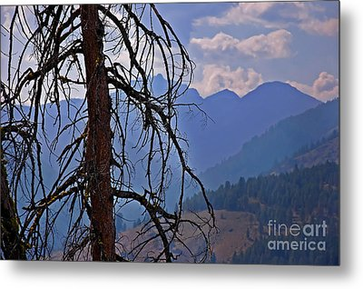Metal Print featuring the photograph Dead Tree Mountains Landscape by Valerie Garner