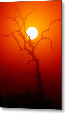 Dead Tree Silhouette And Glowing Sun Metal Print by Johan Swanepoel
