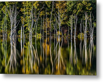 Metal Print featuring the photograph Deadwood by Mihai Andritoiu