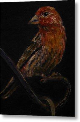 Deans Bird Metal Print by Sherry Robinson