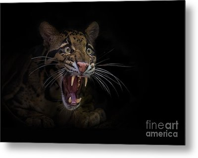 Deceptive Expressions Metal Print by Ashley Vincent