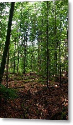 Deep Forest Trails Metal Print