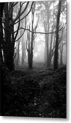 Deep In The Florest Metal Print by Jorge Maia