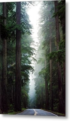 Deep In The Forest Metal Print