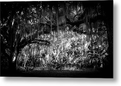 Deep In The Woods Metal Print by Christy Usilton