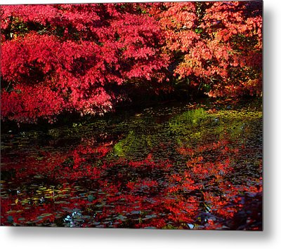 Deep Reflections Metal Print by Connie Handscomb