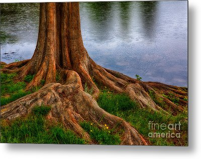 Deep Roots - Tree On North Carolina Lake Metal Print by Dan Carmichael