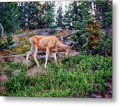 Metal Print featuring the photograph Deer 1 by Dawn Eshelman