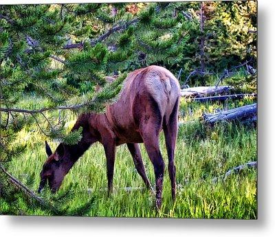 Metal Print featuring the photograph Deer 7 by Dawn Eshelman