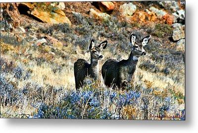 Deer Alert Metal Print by Rebecca Adams