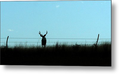 Metal Print featuring the photograph Ohhhh Deer by Shirley Heier