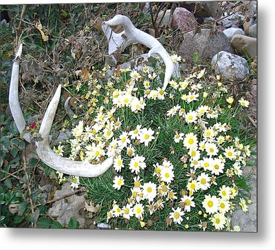Metal Print featuring the photograph Deer Antler Two by J L Zarek