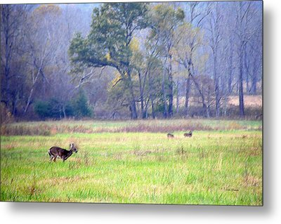 Metal Print featuring the photograph Deer At Cades Cove by Kenny Francis