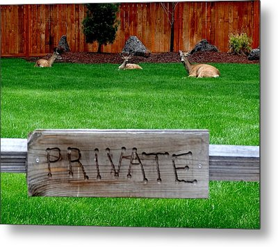 Deer At Rest Metal Print