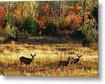 Deer Autumn Metal Print by Bill Kesler